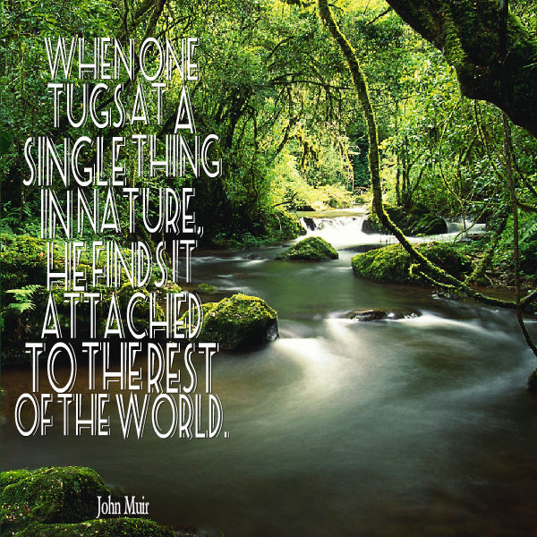 John Muir Quote About Nature Awesome Quotes About Life