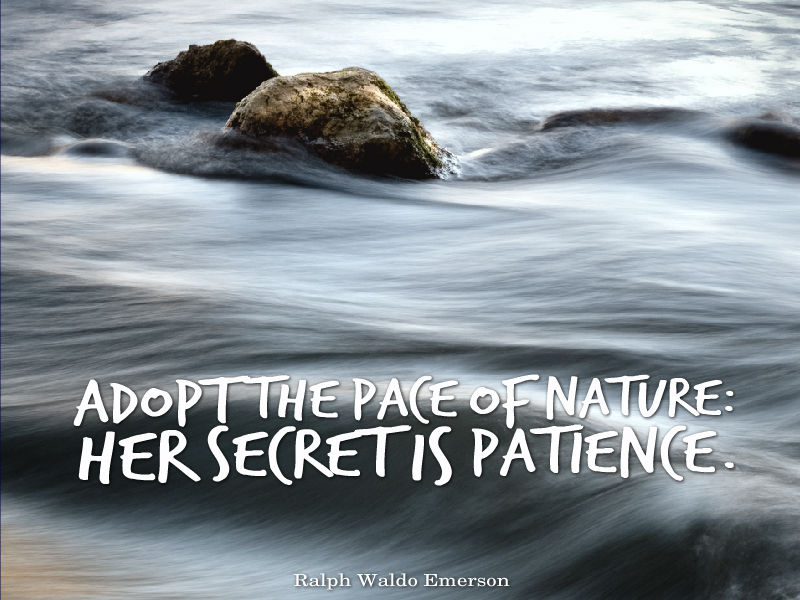 quotes about patience awesome quotes about life adopt the pace of nature her secret is patience