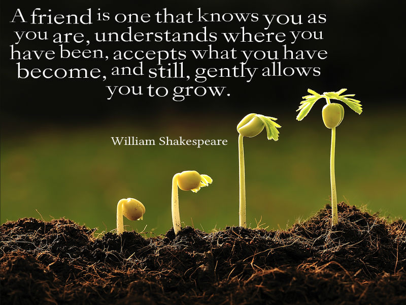 Quotes About Friendship Awesome Quotes About Life