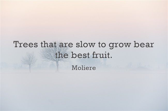 Trees that are slow to grow bear the best fruit